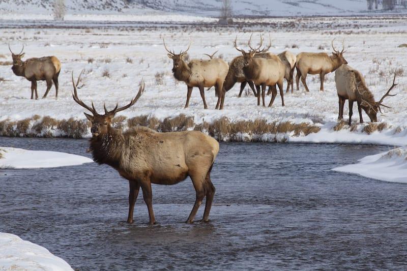 National Elk Refuge in Wyoming
