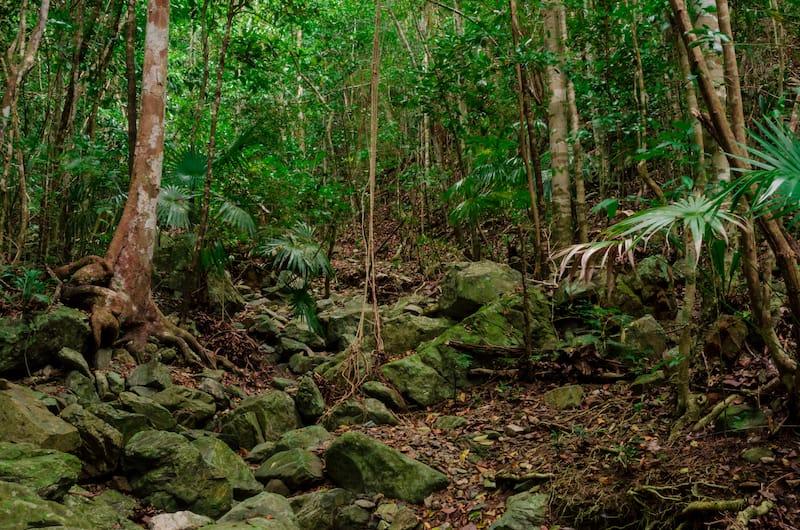 Reef Bay hiking trail