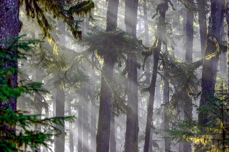 Tongass National Forest in Yakutat