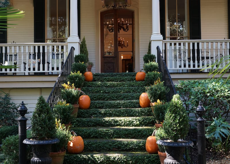 Savannah in October