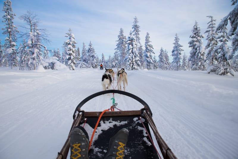 Dog sledding Norway