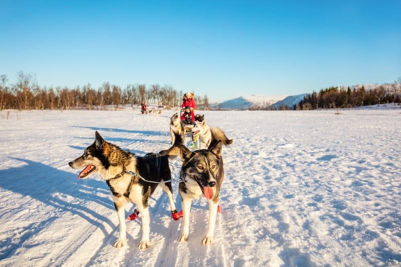 Family dog sledding in Tromso Norway